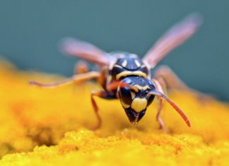 Get-rid-of-wasps