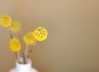 Natural wallart flower