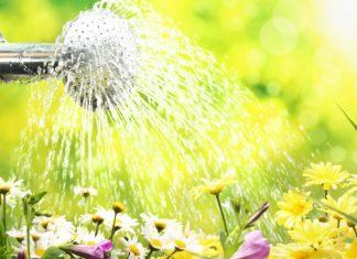 Save-garden-water