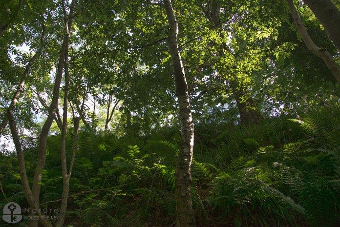 natureholdsthekey.com The rails