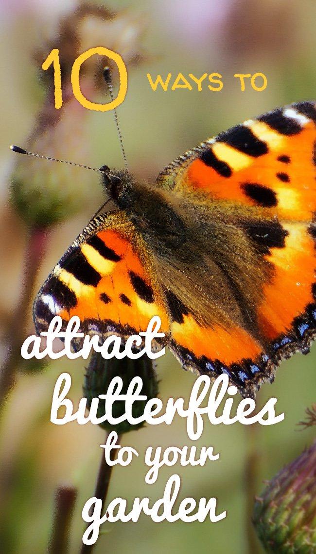 Attract butterflies