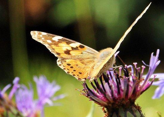 Butterfly wings garden