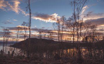 Timber felling reveals Munlochy Bay
