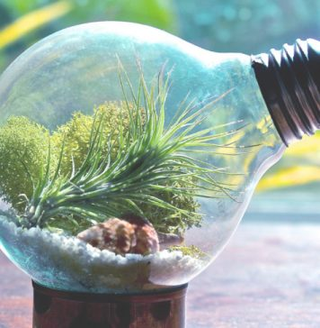 Natural ingredients for a great terrarium
