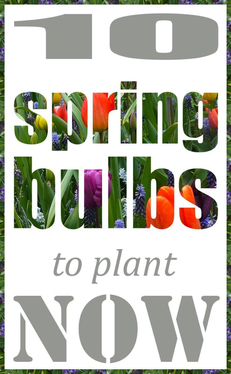 Spring-bulbs-pinterest