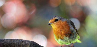 Attract-birds-to-your-garden