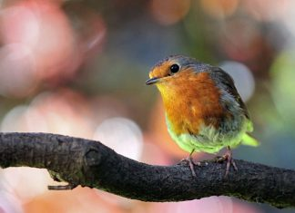 Attract-birds-to-your-garden
