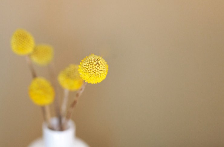 9 ideas for beautiful natural wallart