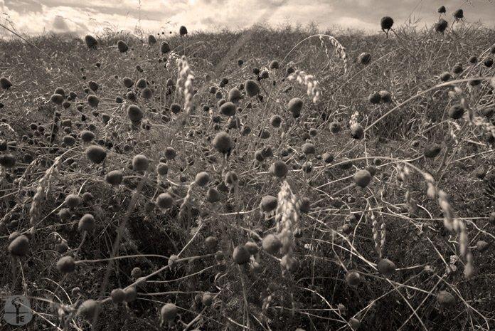 A field - natureholdsthekey.com