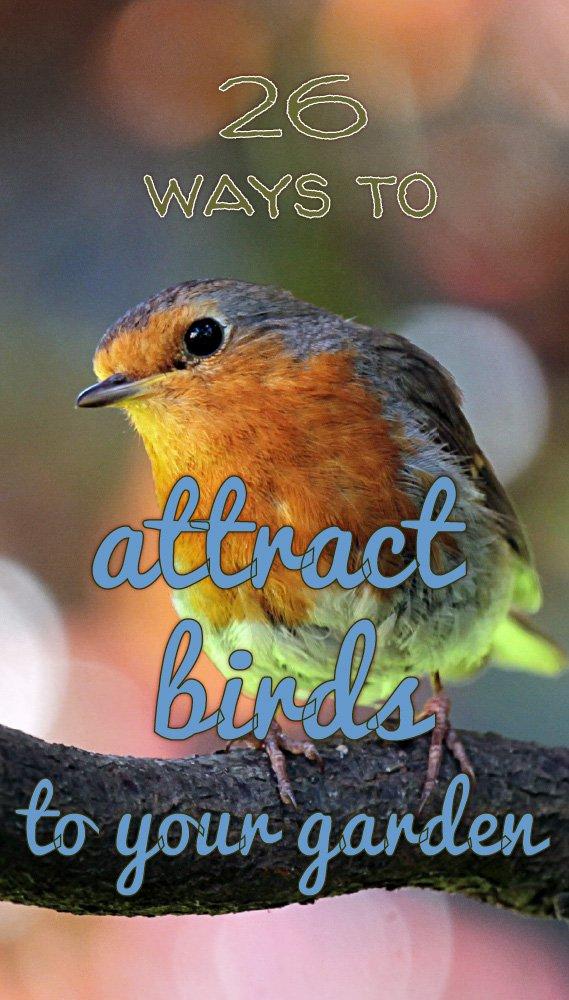 Attract birds to your garden