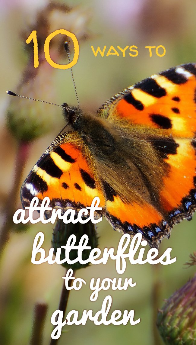 Attract butterflies