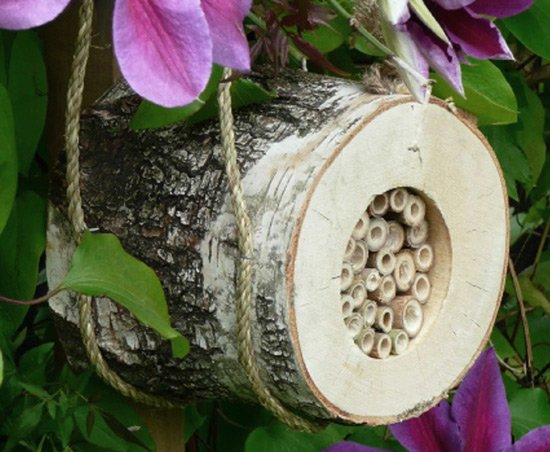 Pollinating bee log