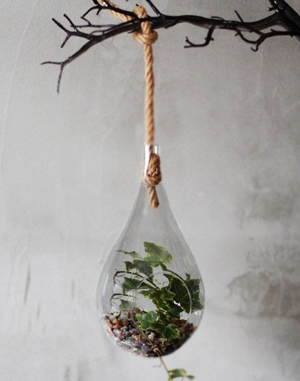 Hanging-glass-terrarium